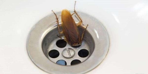 Тараканы не любят чистоту