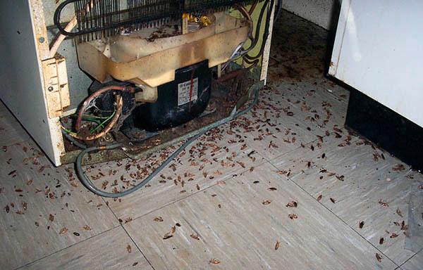 Сильнозараженное тараканами помещение.